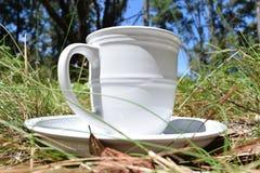 Питье времени весны Стоковое фото RF