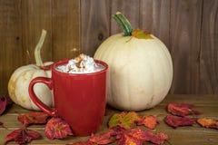Питье горячего шоколада и белые тыквы стоковые фотографии rf