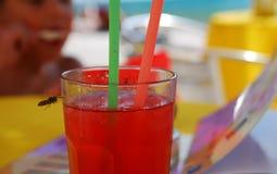 Питье и оса Стоковая Фотография