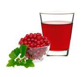 Питье красной смородины в стекле с смородинами ягод Стоковое Изображение