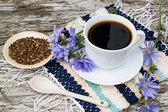 Питье от цикория и зацветая цикория Стоковые Фотографии RF