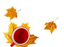 Питье чашки на желтых листьях Стоковые Фотографии RF