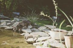 Пить кота Стоковое фото RF