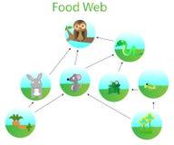 Пищевая сеть Стоковое Изображение