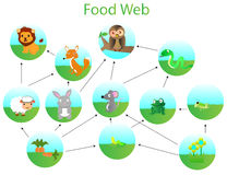 Пищевая сеть Стоковое Изображение RF