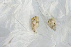 Пищевые брикеты изверганные мини попугаем ары Стоковая Фотография