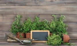 Пищевые ингредиенты свежего классн классного трав здоровые Стоковое Изображение RF