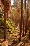 Пиломатериал в лесе Стоковые Изображения RF