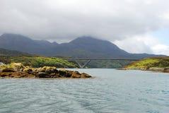 плавает вдоль побережья одичалое Стоковые Фотографии RF