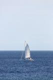 Плавание катамарана Стоковые Изображения