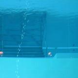 Плавательный бассеин подныривания Стоковая Фотография