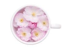 плавать вишни цветений Стоковые Изображения
