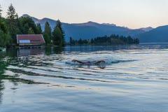 Плавать в озере Стоковые Изображения RF