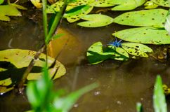 Плавать в tranquilityl стоковая фотография rf