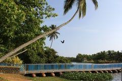 плавать моста Стоковые Изображения RF