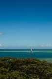 плавать рифов Стоковое Фото