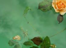 плавая гобелен Стоковые Изображения