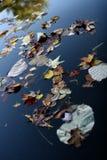 плавая листья стоковое фото rf