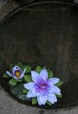 плавая цветки стоковое изображение rf