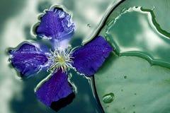 плавая цветок Стоковые Изображения RF