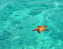 плавая starfish Стоковые Фото