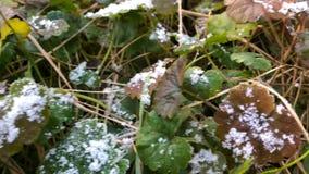 Плавя заморозок на траве, конец вверх заморозка раннего утра, концепции весны видеоматериал