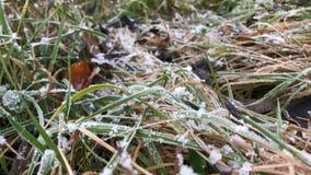 Плавя заморозок на траве, конец вверх заморозка раннего утра, концепции весны сток-видео