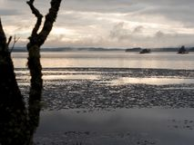 Плавя крышка льда на туманном озере в весеннем времени Стоковые Изображения