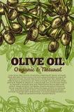 Плакат пука оливок вектора для оливкового масла Стоковые Фото