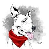 Плакат с изображением собаки в ковбойской шляпе также вектор иллюстрации притяжки corel Стоковая Фотография