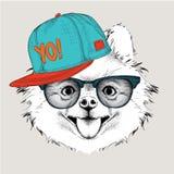 Плакат с портретом собаки изображения в шляпе бедр-хмеля Иллюстрация вектора чихуахуа Стоковая Фотография RF