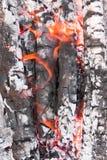 пламена золы Стоковые Изображения RF