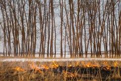 Пламена огня, быстро бежать к деревьям воспламеняемость травы весной и осени Опасность и стоковое изображение rf