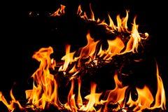 Пламена огня природы Стоковая Фотография