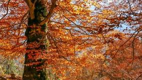 Пламена осени над деревом Стоковое фото RF