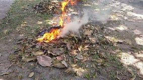 Пламена от горящего отхода, сухие листья причиняют дым, пыль, причины загрязнения воздуха Концепции воздушнодесантной токсичности видеоматериал