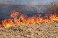 пламена пожара поля Стоковое Изображение