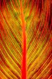 пламенеющие листья Стоковые Фото