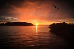 пламенеющий заход солнца Стоковые Изображения