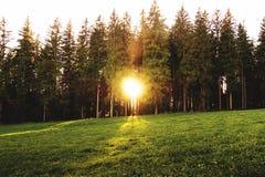 Пламенистый восход солнца между лесными деревьями Стоковая Фотография RF