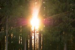 Пламенистый восход солнца между лесными деревьями Стоковое Изображение