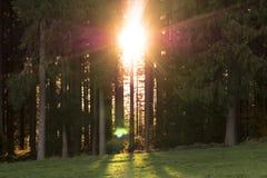 Пламенистый восход солнца между лесными деревьями Стоковое Изображение RF