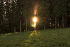 Пламенистый восход солнца между лесными деревьями Стоковое Фото