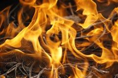Пламя пожара Стоковые Изображения