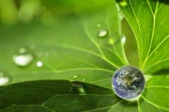 планета листьев Стоковые Фото