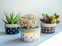 Плантаторы красочного круга геометрические Покрашенные конкретные баки для домашнего украшения стоковая фотография