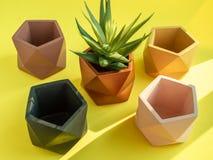 Плантаторы красочного пентагона геометрические Покрашенные конкретные плантаторы для домашнего украшения стоковое изображение