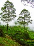 Плантации чая благоустраивают изображения Шри-Ланка стоковая фотография