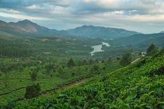 Плантации чая в холмах стоковое изображение