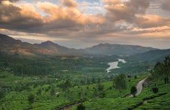 Плантации чая в холмах стоковые фото